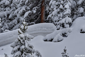 snow drift and snow covered pine trees may colorado 2021