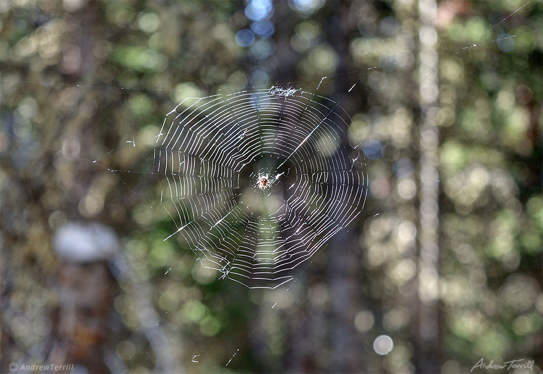 spiders web in forest