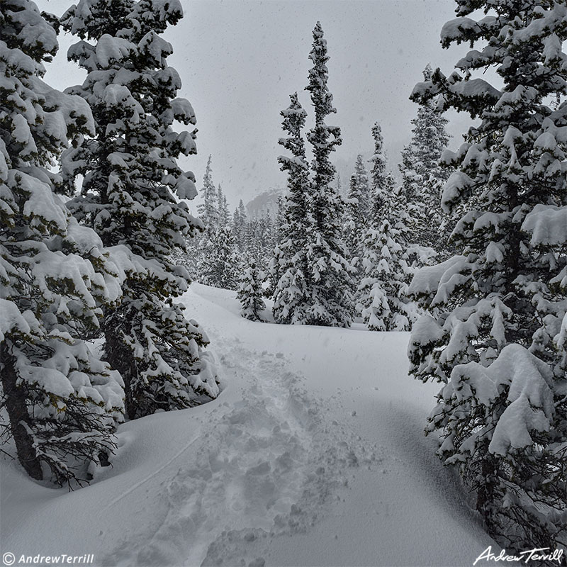 footsteps trail in snow through forest in cold snowy weather