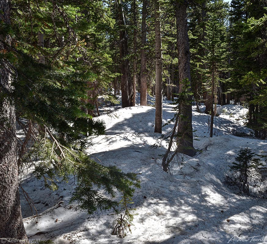 deep spring snowpack in forest colorado june