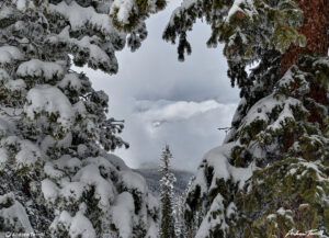 snow covered pines and clearing clouds in forest