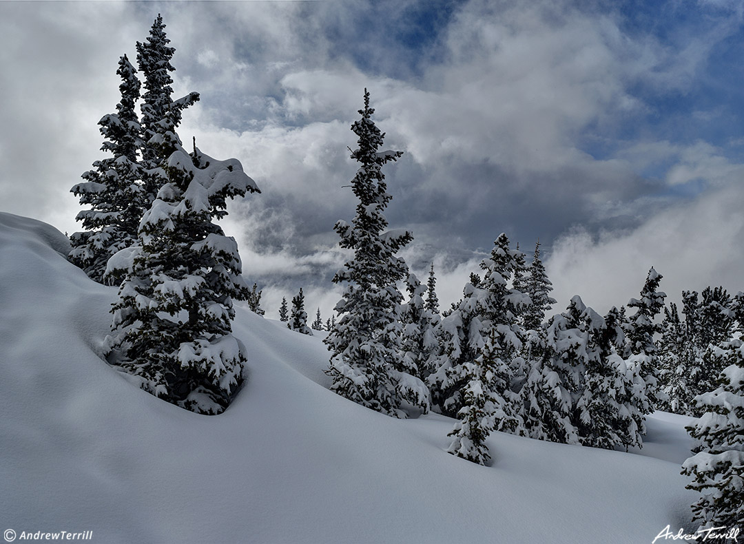 clearing winter storm and snowy forest colorado