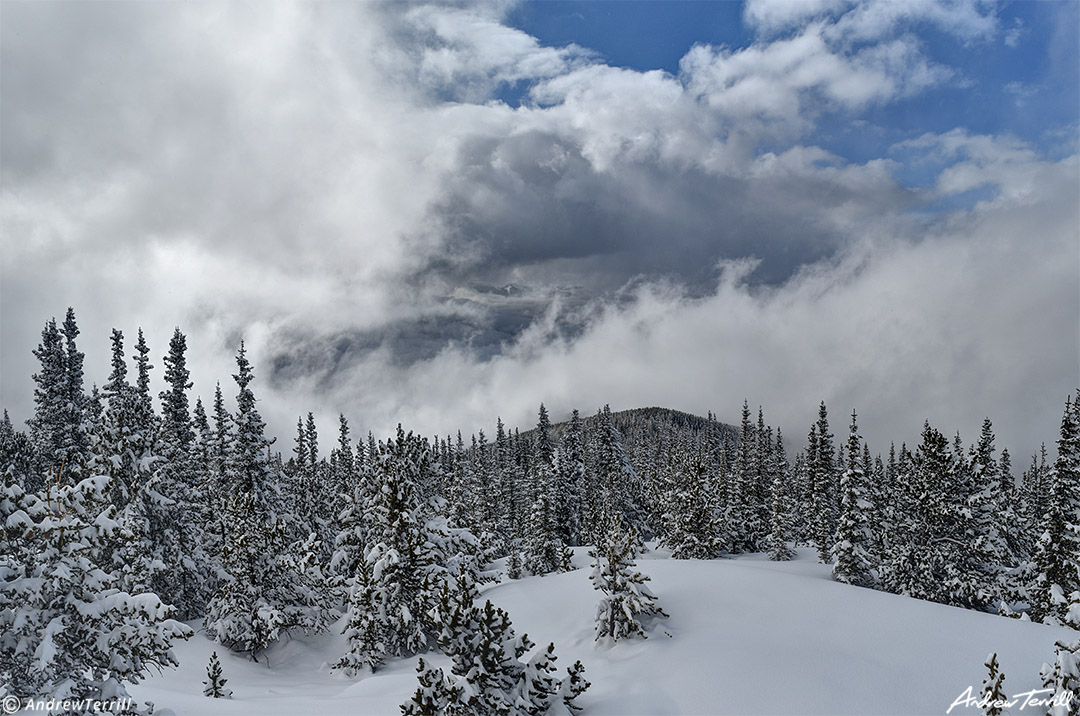clearing winter storm clouds and snowy forest colorado