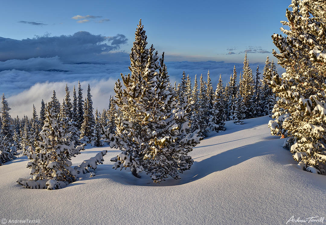 evening light on snow covered pine trees above the clouds in rocky mountains