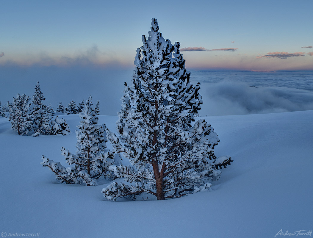 frozen trees on cold snow covered mountain above sea of clouds after sunset in colorado