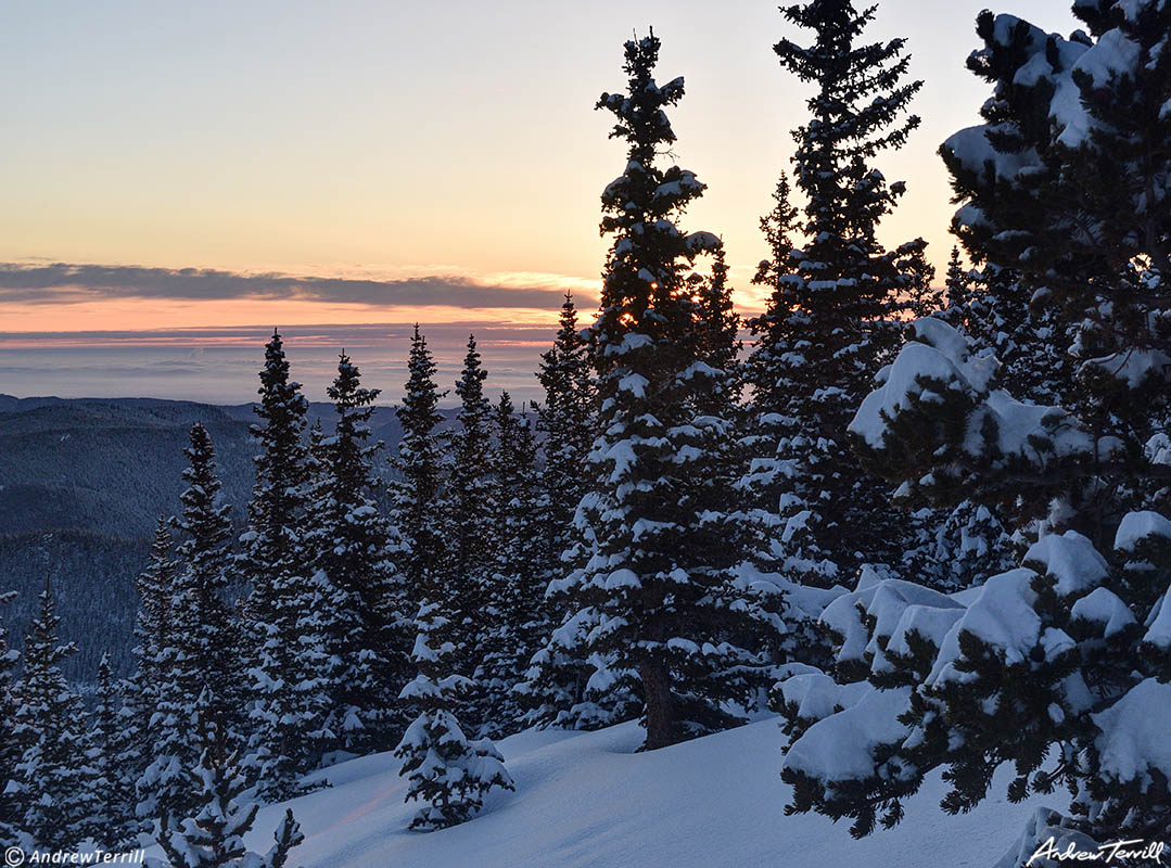 Winter sunrise with snow covered pine trees