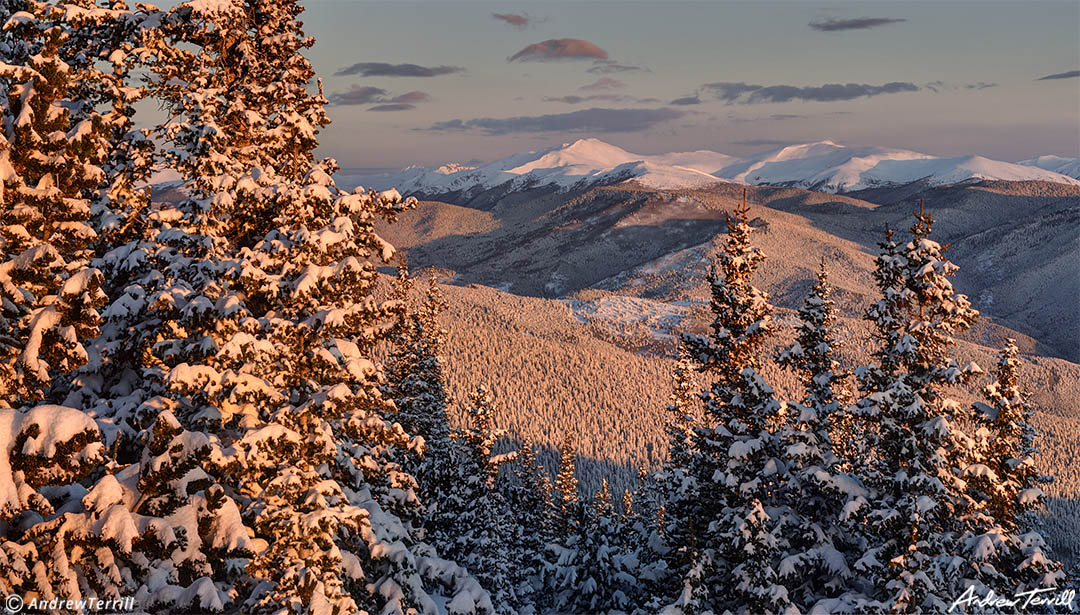 winter sunrise with alpenglow snow covered pines and mountains Front Range colorado