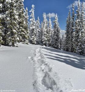 tracks in snow through Colorado winter forest
