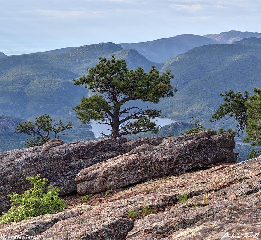 pine colorado in front range foothills