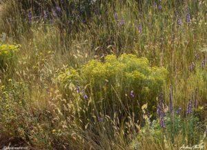 colorado front range late summer meadow golden colorado