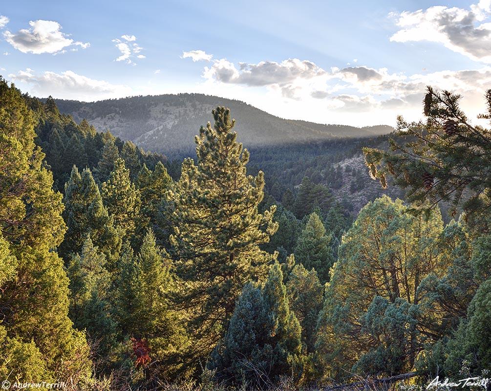 evening light in colorado foothills