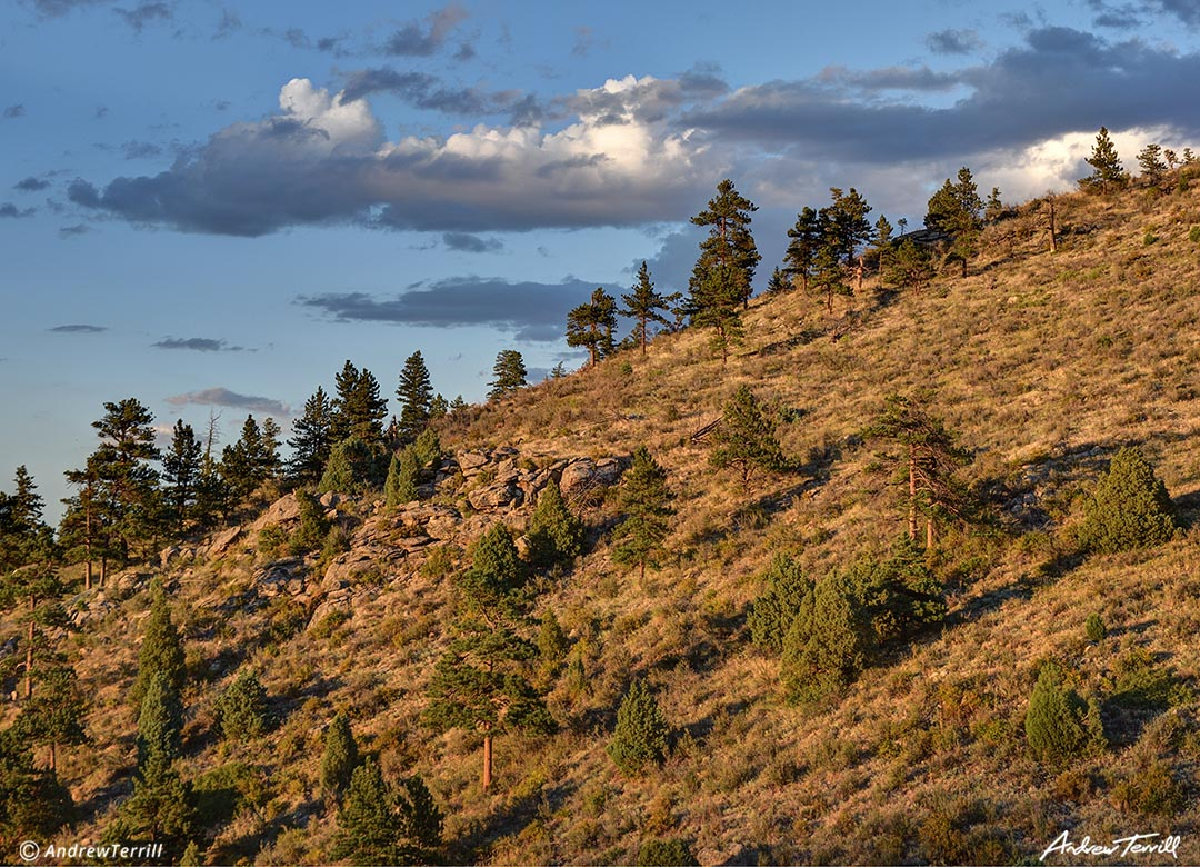 evening light on mountain slope with pine trees colorado front range foothills