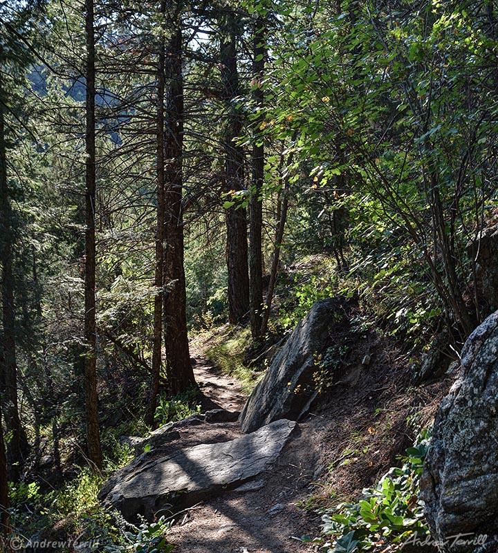 forest path colorado front range golden