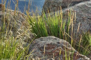 grass and rocks colorado front range foothills august 2021