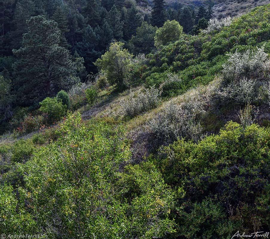 hill side vegetation colorado front range summer august
