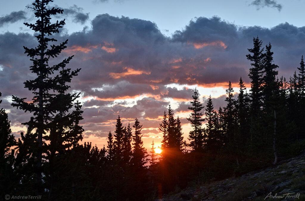 sunrise through the colorado pine forest