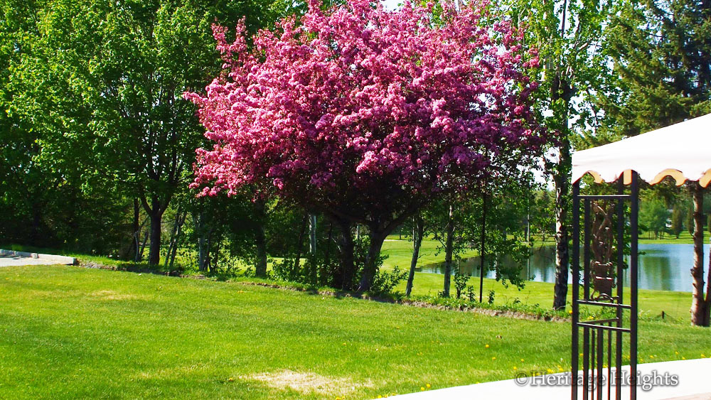 pinktree2