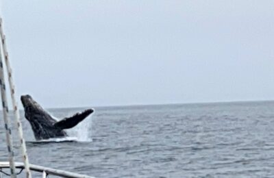 Farallon Islands, Cetaceans, Beginnaker Experiments