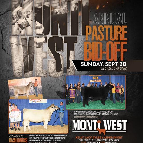 Monti West Black Cattle 2020