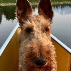 Irish Terrier - Wenonah Champlain Canoe