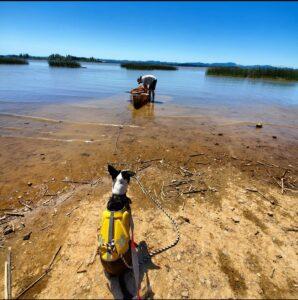 Wenonah Fisherman Canoe - Collie Whippet Mix