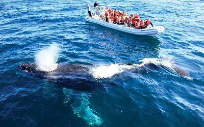 Cinco razones para visitar Riviera Nayarit en época de avistamiento de ballenas