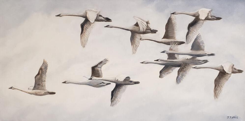 ALOFT  |  Oil on canvas  |  12 x 24  |  13 x 25 Framed  |  $1,150
