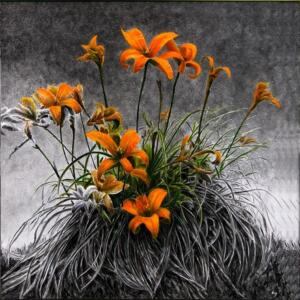 LILIES  |  36 x 36  |  Lily ash and oil on panel  |  39.5 x 39.5  Framed  |  $3000