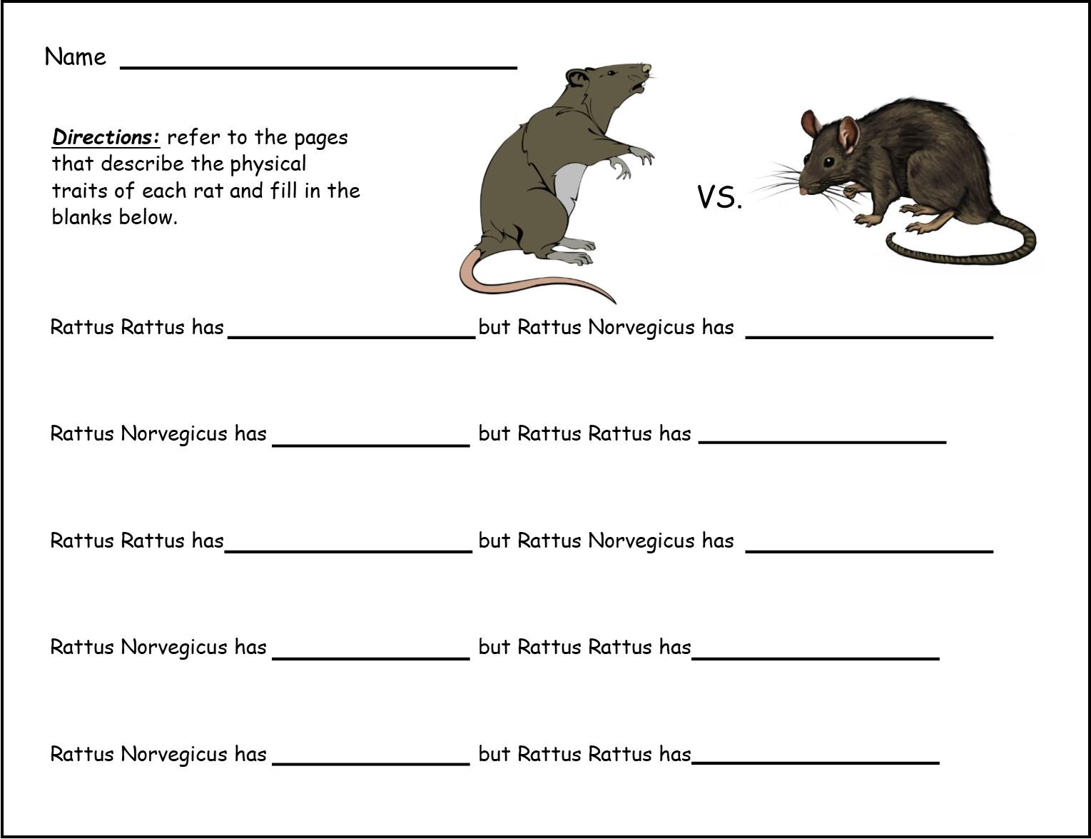 drawing of bats and rats