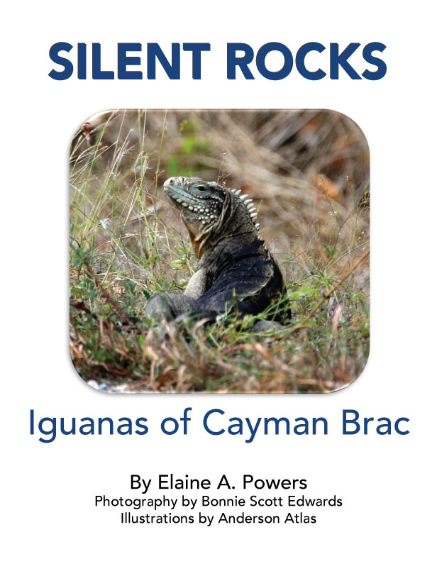 """cover of book """"Silent Rocks."""" white background, rock iguana pictured in natural habitat on island Cayman Brac"""