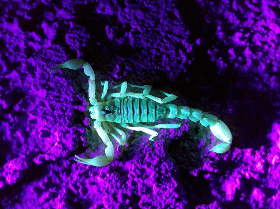 image of a dead scorpion glowing in moonlight