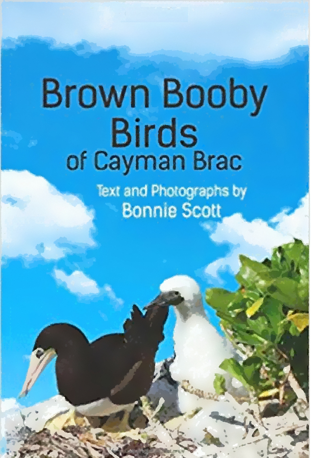 a book cover with blue sky and white clouds, with Brown Booby birds on the beach next to a bush