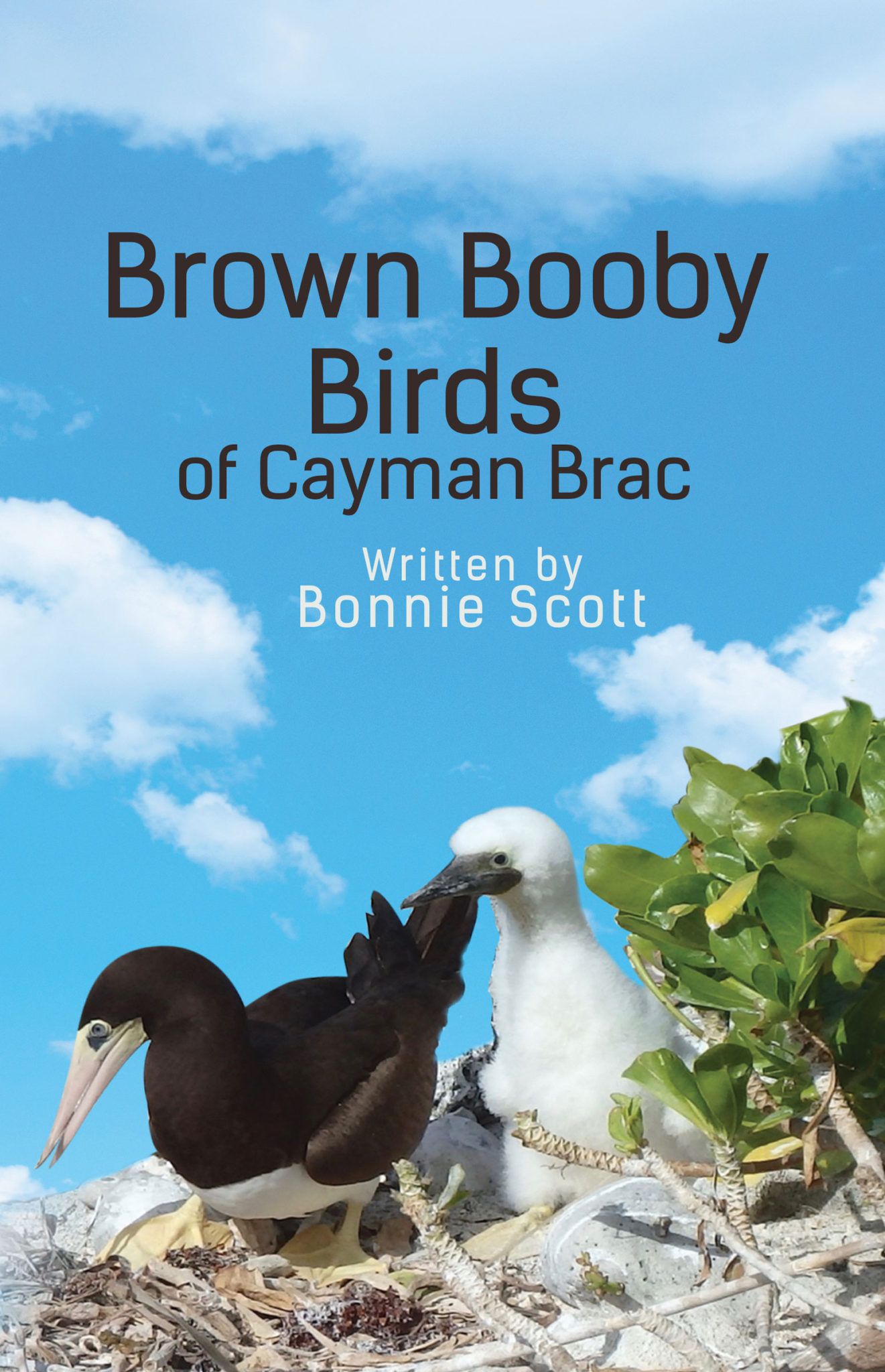 A book cover with a blue sky, white clouds and brown booby birds on the beach