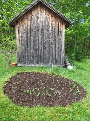Photo of Flower bed at end of potting shed