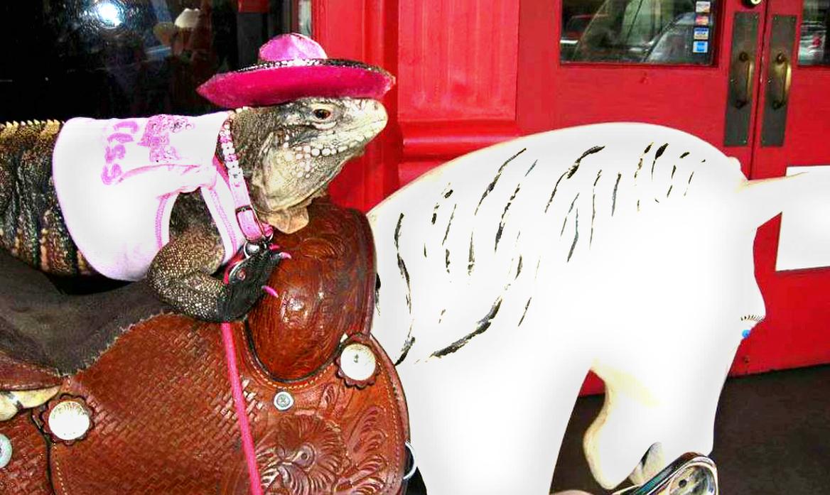 Iguana in pink hat