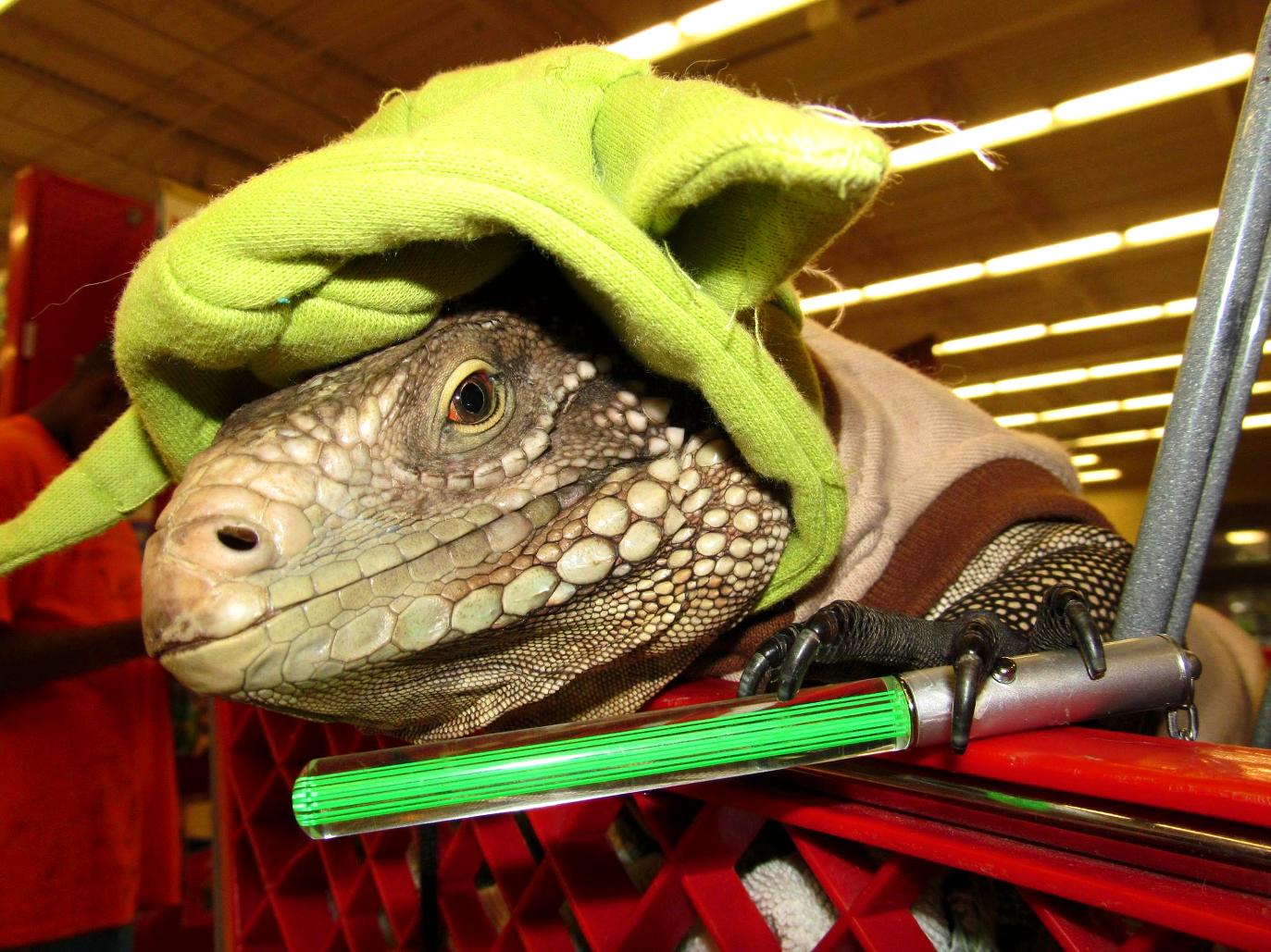 iguana in yoda costume