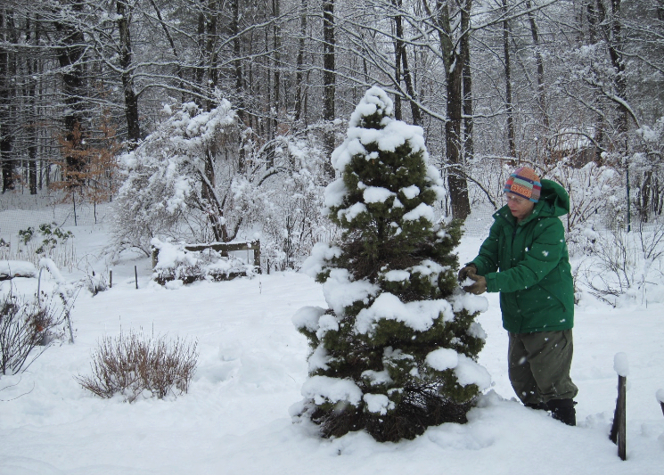 Photo of woman in snow near conifer