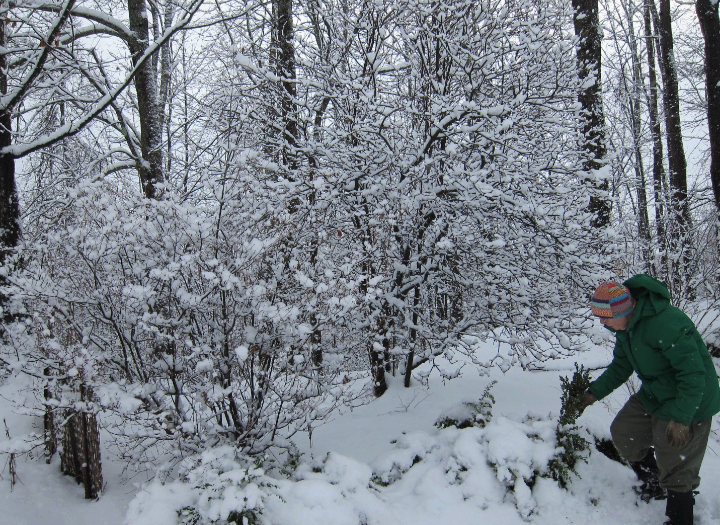 photo of woman digging shrub out from snow
