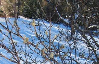 photo flower buds in winter