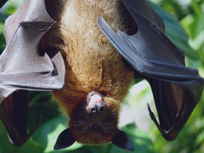 photo of bat hanging upsidedown