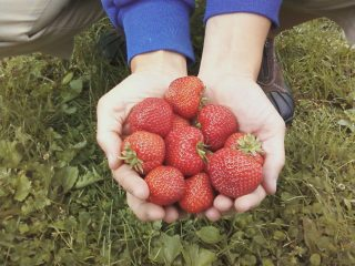 Farm Stands Donating Produce