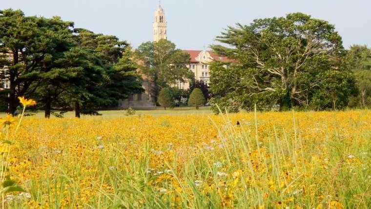 Seeding A Meadow on Earth Day
