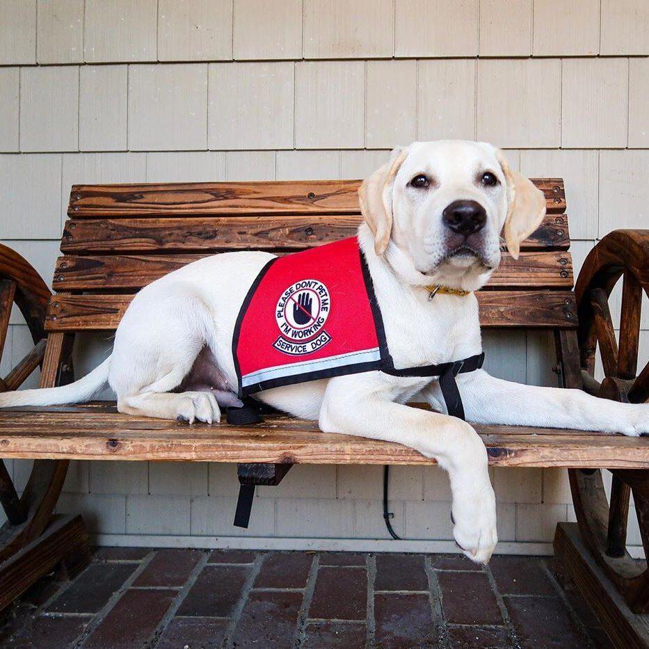 Premier Dog Training