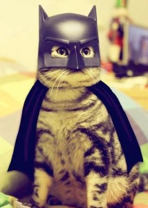 Bat-cat?