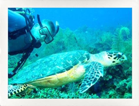 Tad With a Sea Turtle
