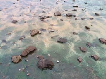 Seaweed to die for