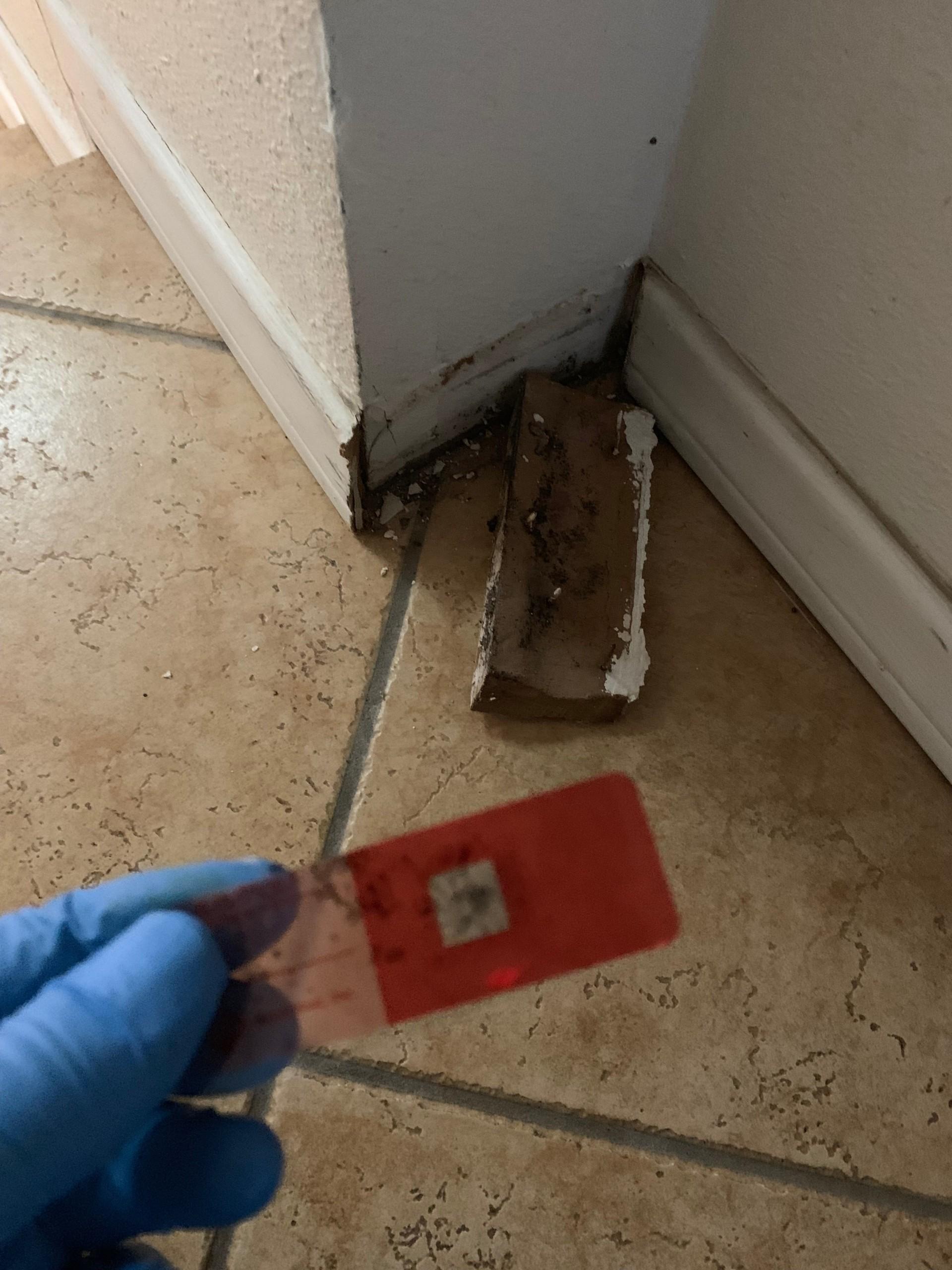 Mold Sample Surface Testing