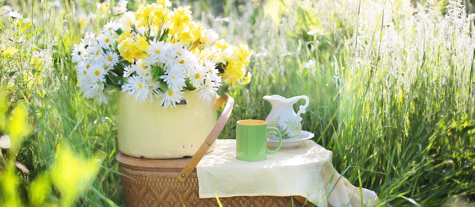 coffee-plant-lawn