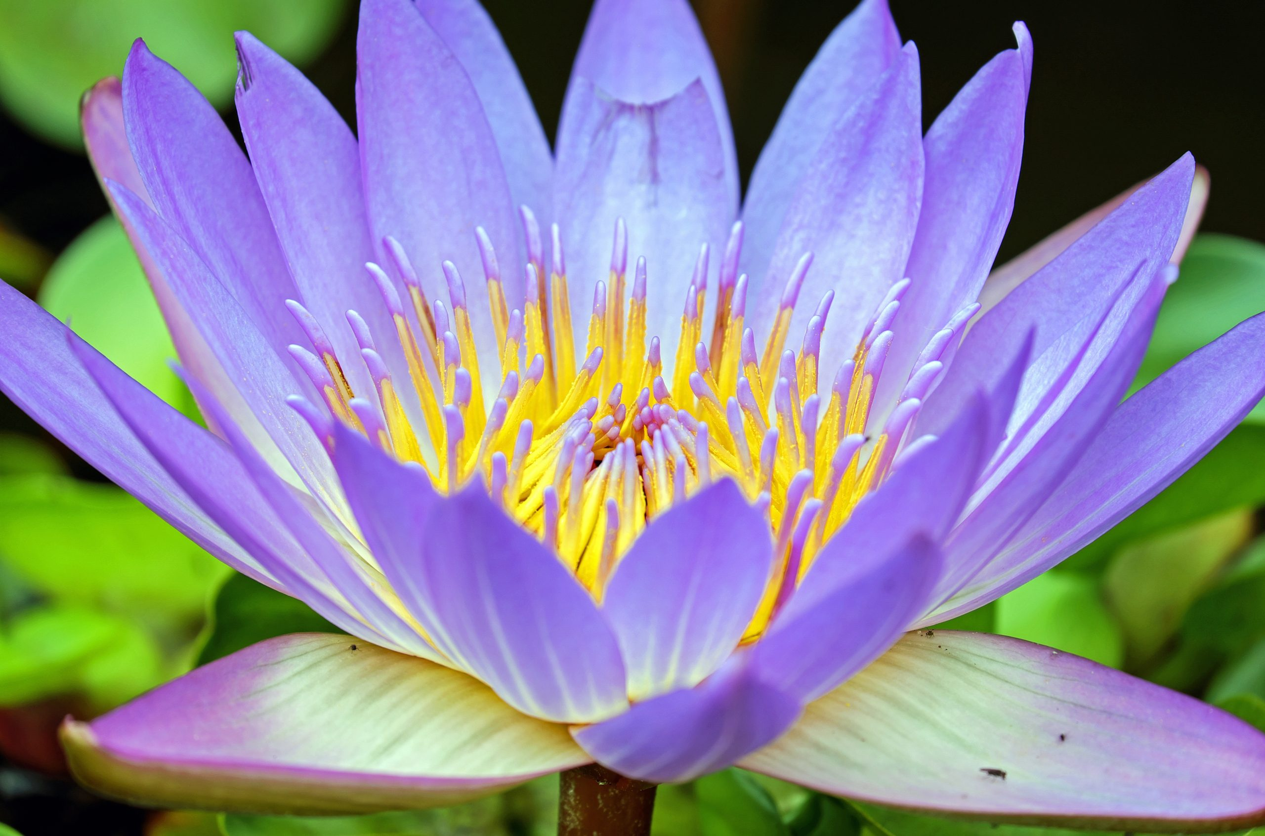 blossom-plant-photography-flower-purple-petal-567862-pxhere.com