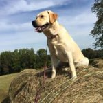 Daphne enjoys the view from atop a hay bale.